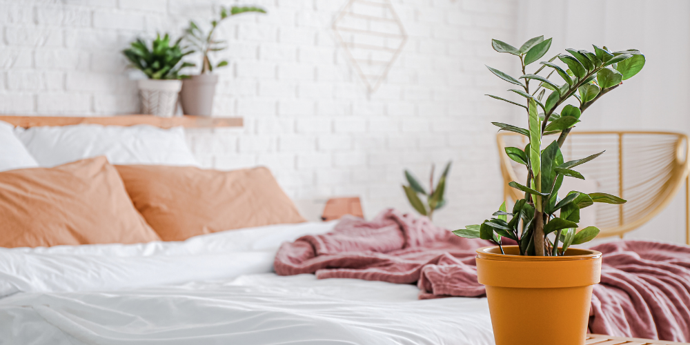 Low maintenance indoor plants for every home